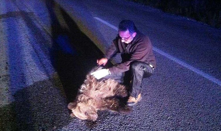 Νεκρό Αρκουδάκι